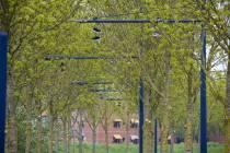 Sneakers bungelen boven Pollendam
