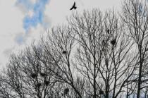 Gemeente verjaagt roeken uit Oosterpark