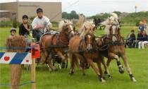 Spektakel tijdens Harlinger Paardenmarathon