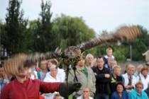 Ruim 800 belangstellenden voor Roofvogeldemonstratie